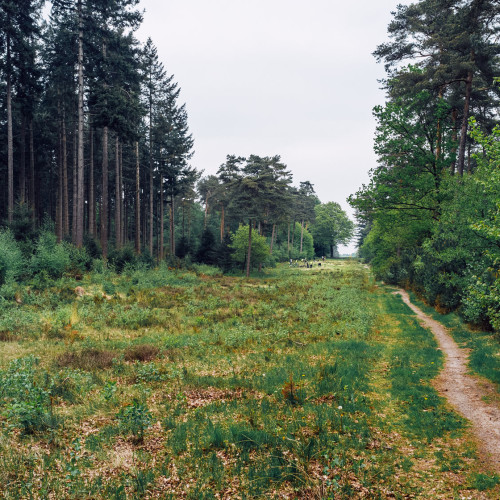 Heuvelrug-0194